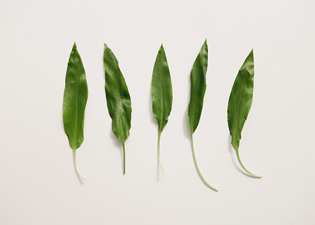 leafs-blog